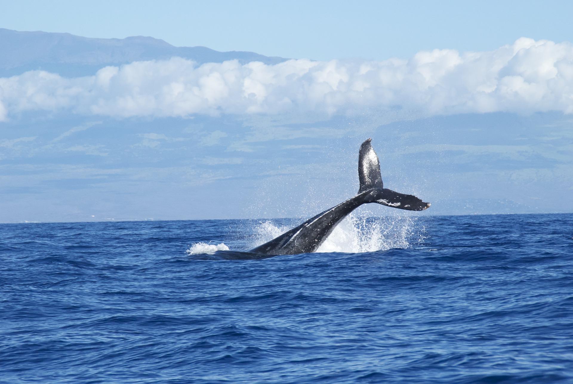 クジラの尾びれ