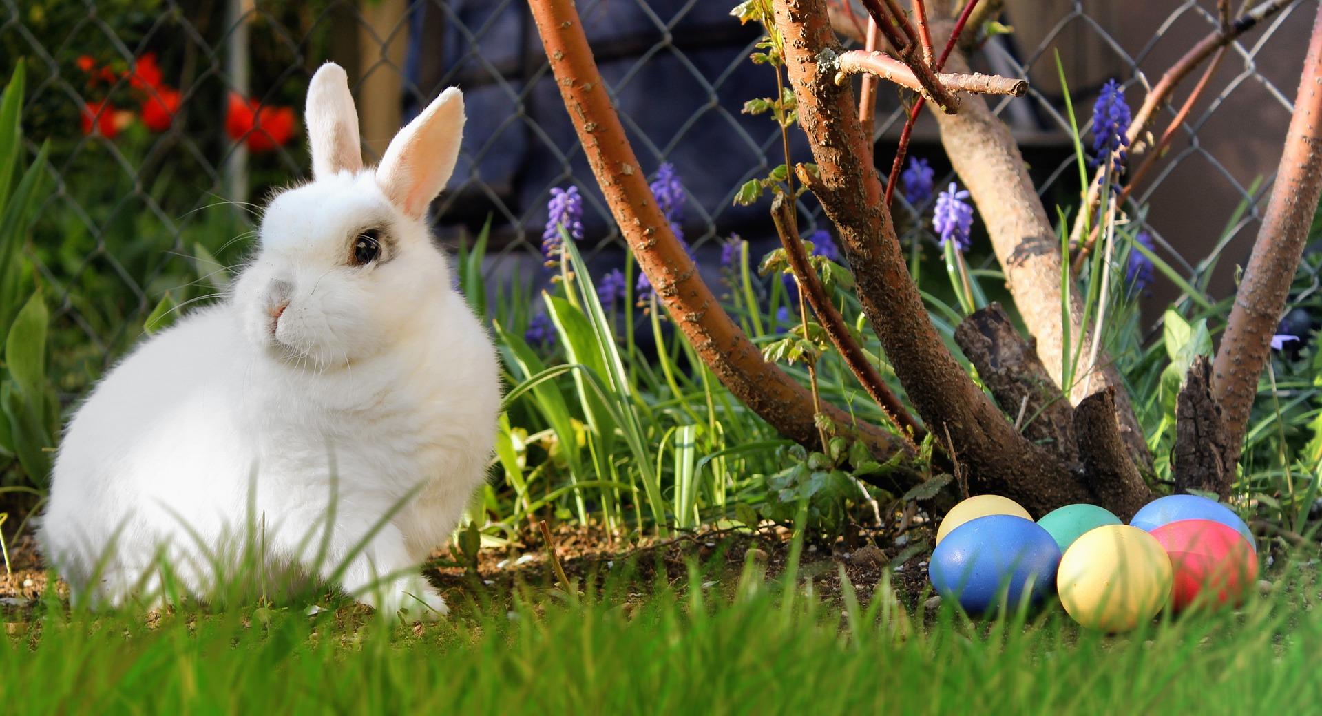 ウサギと卵
